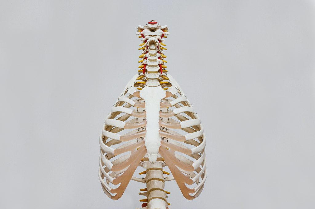 A skeleton of the upper body shows lungs